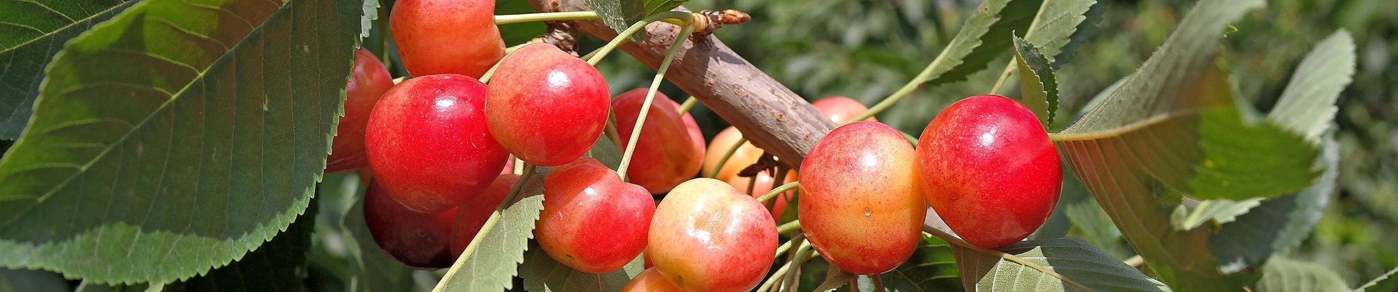 """ממצאי דו""""ח הוועדה המייעצת לתזונה 2015"""